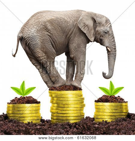 Big Elephant on a growing pile of golden coins. Strong investments concept.
