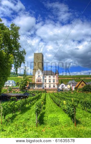 Vineyard, Ruedelsheim, Hessen, Germany