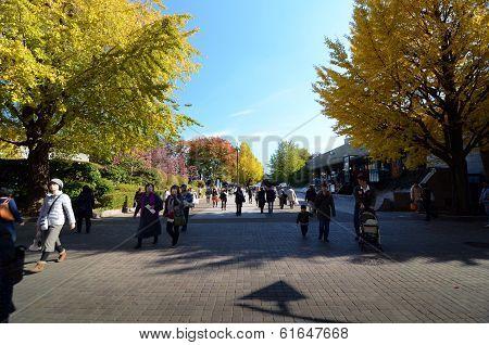 Tokyo - November 22: Visitors Enjoy Colorful Trees In Ueno Park