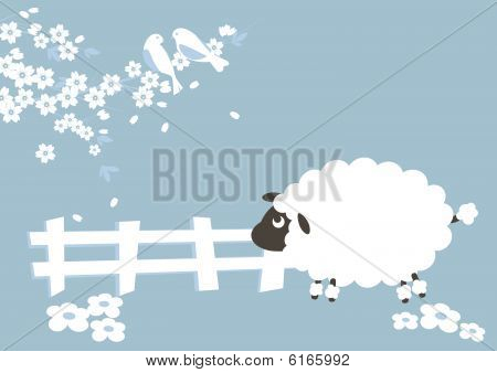 Sheep and seson