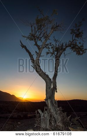 Lonely tree with sunrise