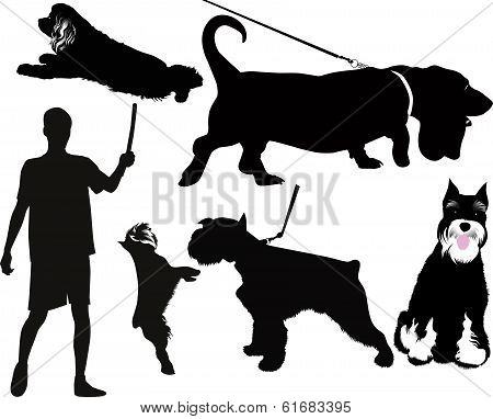 dog animals
