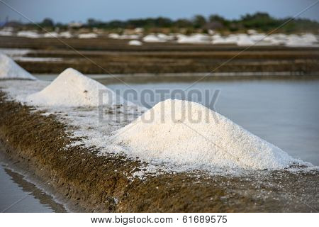 Freshly mined sea salt ready for packaging