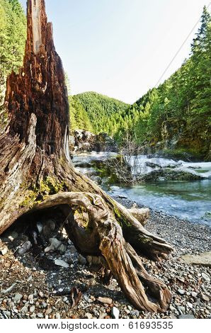 Mountain with curved driftwood tree in foreground