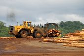 pic of logging truck  - Log loader working a lumber mill logging truck reciving yard in Roseburg Oregon - JPG
