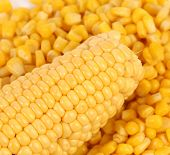 stock photo of corn-silk  - Tasty yellow ear of corn - JPG