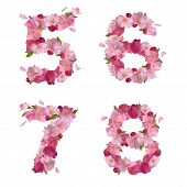 Spring font from cherry flowers figures 5,6,7,8