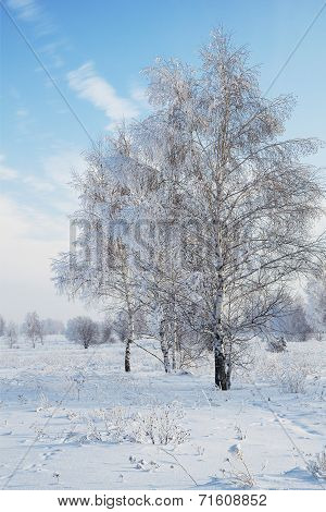 Landscape In Snow Against Blue Sky