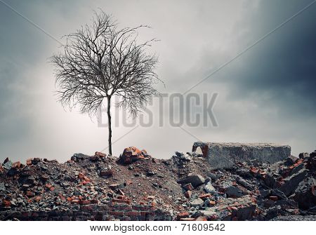 Conceptual image of dry tree standing on ruins