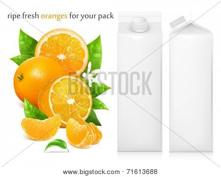 Fresh ripe oranges with green leaves and water drops. Juice white carton package. Vector illustration