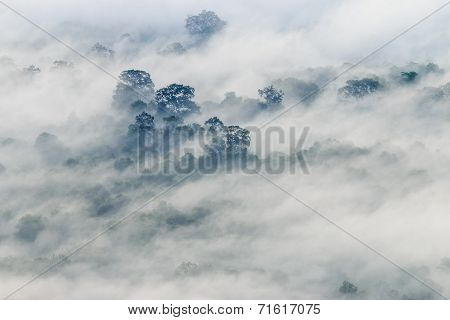 The Fog Covered The Forest In The Morning At Pha Mo I Daeng Cliff, Sisaket, Thailand