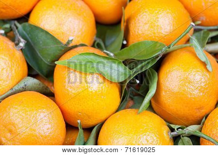 Background Of Satsumas