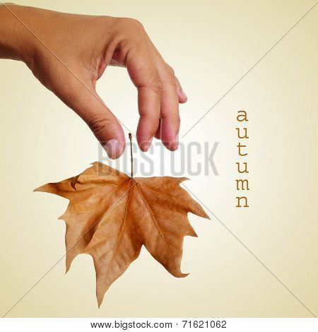 a man dropping a dried leaf and the text autumn on a beige background, with a retro effect