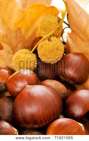 closeup of some chestnuts and some autumn leaves