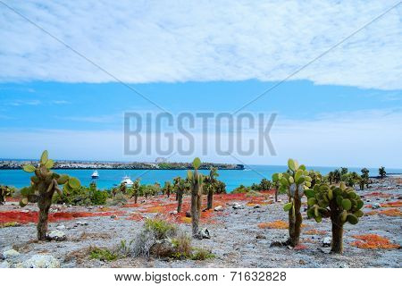 Beautiful landscape of Galapagos South Plaza island covered with endemic succulent sesuvian grass
