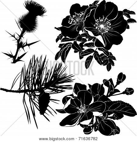 thistle dogrose rose blooming apple Trees a fur-tree