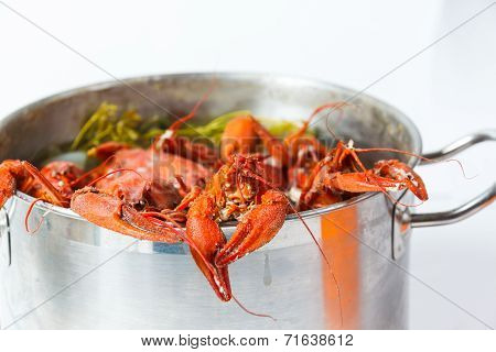 Boiled Crayfish In Pan
