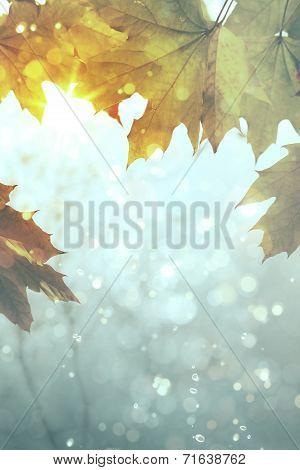 Art Yellow Autumn Maple Leaves On Grey Rain  Background