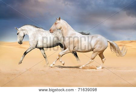 Group of horse