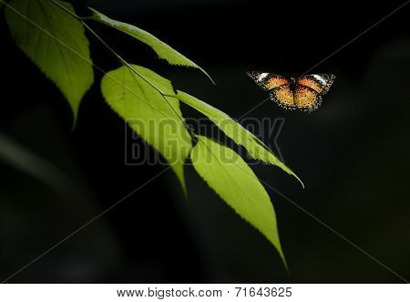 A tropical butterfly