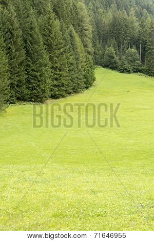 Meadow And Forest In Trentino - Italy