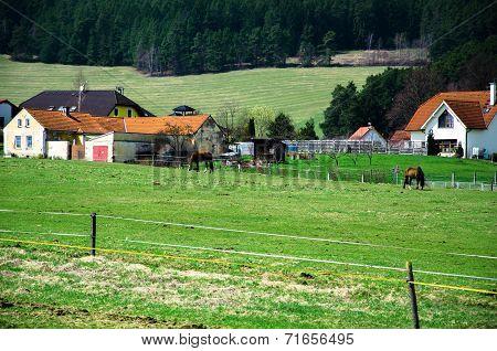 Horse Farm In Austria