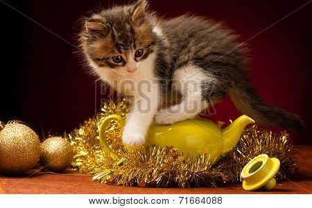 Young Cat Playing With Christmas Ornaments