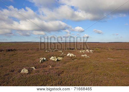 Rocky Moorland Landscape