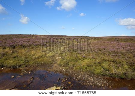 Moorland Rocky Stream