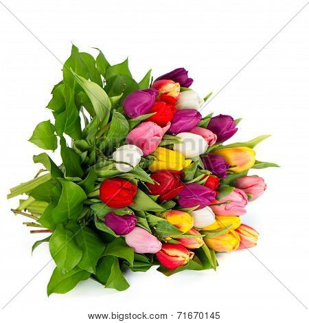 Fresh Colorful Tulips Over White