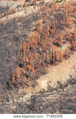 Forest Destruction By Fire