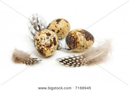 Some Eggs From Peewit Bird