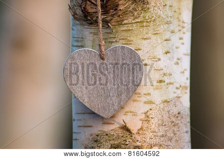 love heart tree trunk background