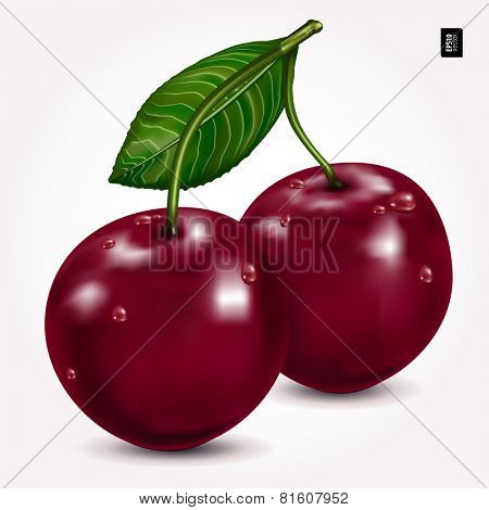 Bright berries ripe cherry with drops, isolated on white. Vector illustration.