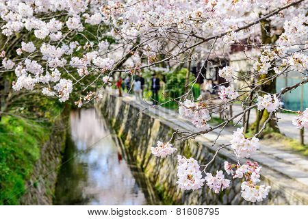 Kyoto, Japan at Philosopher's Walk in the Springtime.