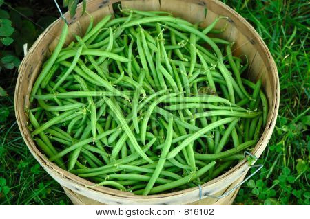 Green Bean Basket