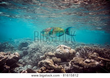 Reef with a variety of hard and soft corals and tropical fish. Maldives Indian Ocean coral reef.
