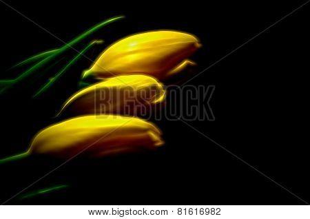 Yellow In Three