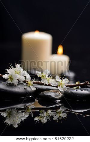 Still life with cherry blossom with white candle on black stones