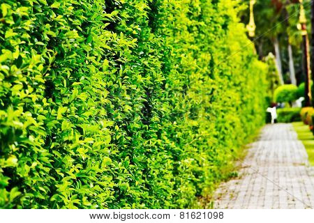 Wall Shrubs Can Use As Background