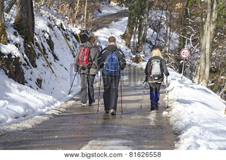 Trekking In The Snow Forest