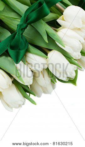border  of white  tulips