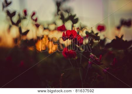 Red Poppies And Wheat Spikes. Vintage Background. Selective Focus. Retro Style Postcard.