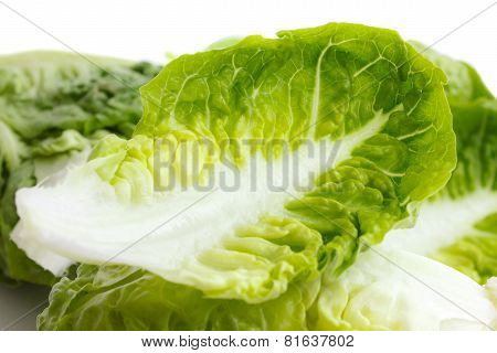 Detail of gem lettuce leaf.