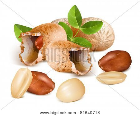 Peanuts with kernels and leaves. Vector illustration
