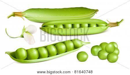Green peas. Vector illustration.