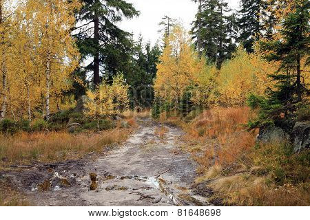 Muddy way in the autumn forest.