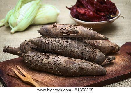 Manioc or Cassava