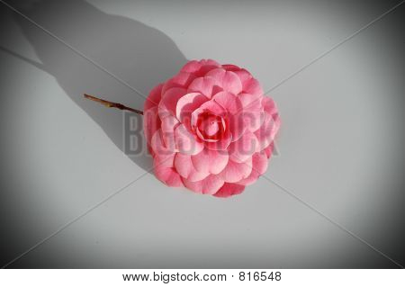 Pink Flower Vignetted