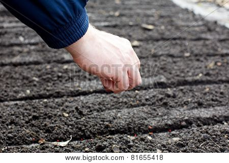 Person Planting Grains In The Ground In Spring Day.